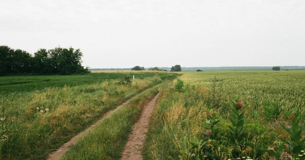 A dirt road through a large field with trees in the distance and a gray sky.