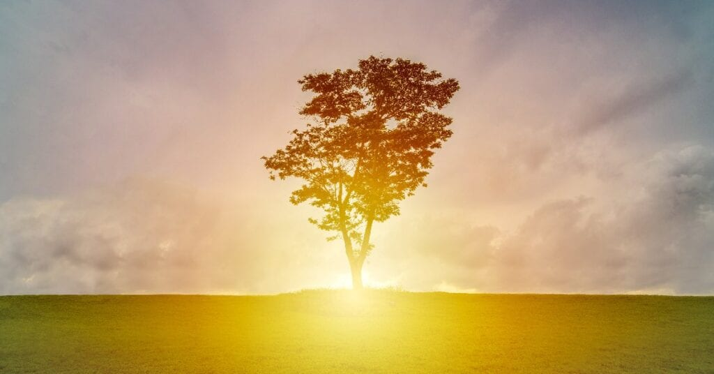 A lone tree in a field at sunrise.